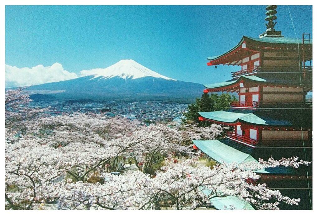 朝倉山浅間公園の桜