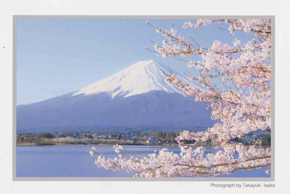桜の季節の富士山と湖の絵葉書