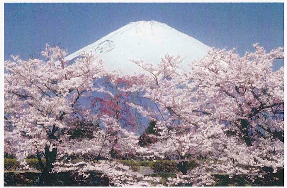 桜の季節の富士山
